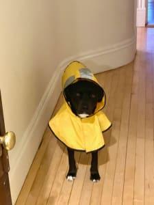 Winston in Raincoat