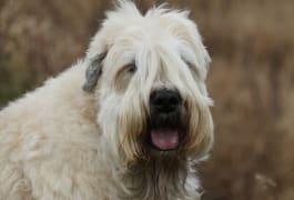 embark dog breeds for kids 3