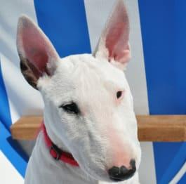 embark dog breeds for kids 5