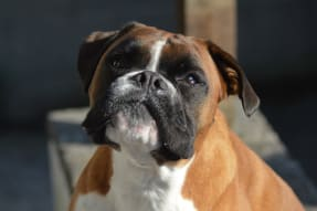 embark guide to boxers 2