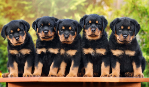 canine parentage testing