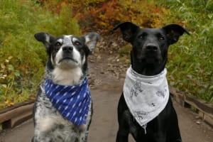 embark dogs dressed