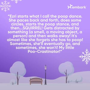 #AllGoodDogs Contest Winner The Poo-crastinator Story