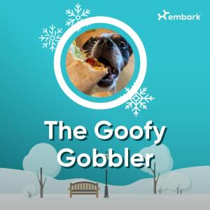 #AllGoodDogs Goofy Gobbler Winner