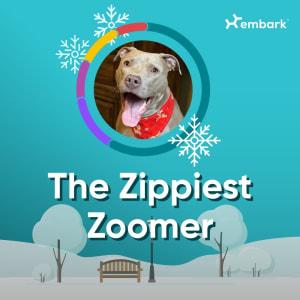 #AllGoodDogs Zippiest Zoomer Winner