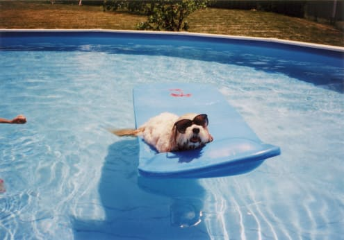embark dog floating