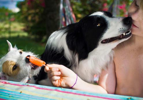 embark dog eating pop