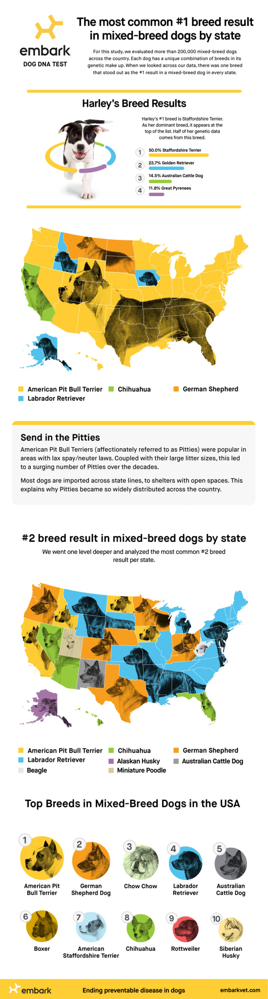 most common dog breed in each US state