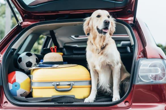 embark dog traveling