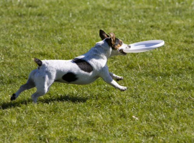 embark dog playing