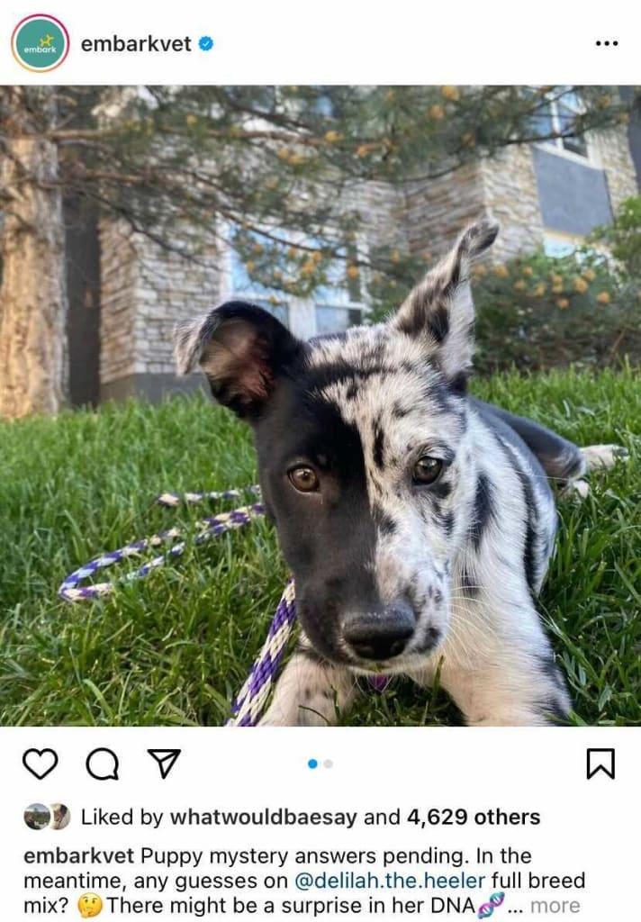 Delilah's Embark Breed Guesses Post