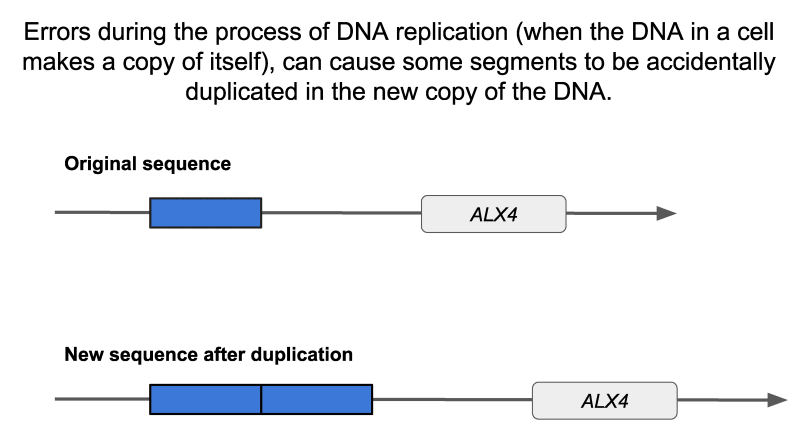 What is duplication?