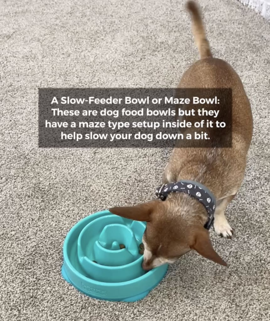 dog eating from food puzzle
