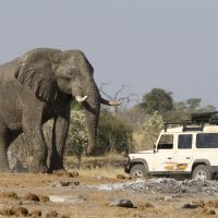 A large Africa elephant standing in front of a Serengeti safari vehicle