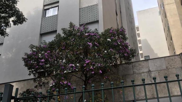 Imagem do imóvel ID-17969 na Rua Monte Alegre, Perdizes, São Paulo - SP