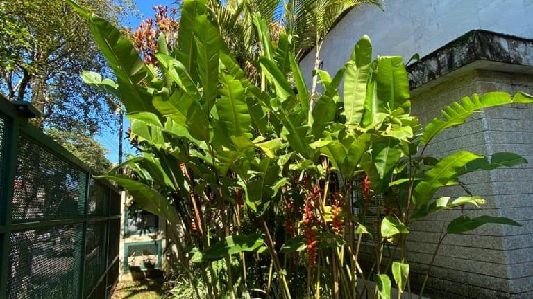 Imagem do imóvel ID-14961 na Rua Dom Henrique, Jardim Luzitania, São Paulo - SP