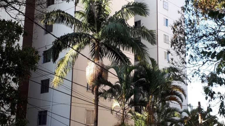 Imagem do imóvel ID-16281 na Rua Doutor Sabóia de Medeiros, Vila Mariana, São Paulo - SP