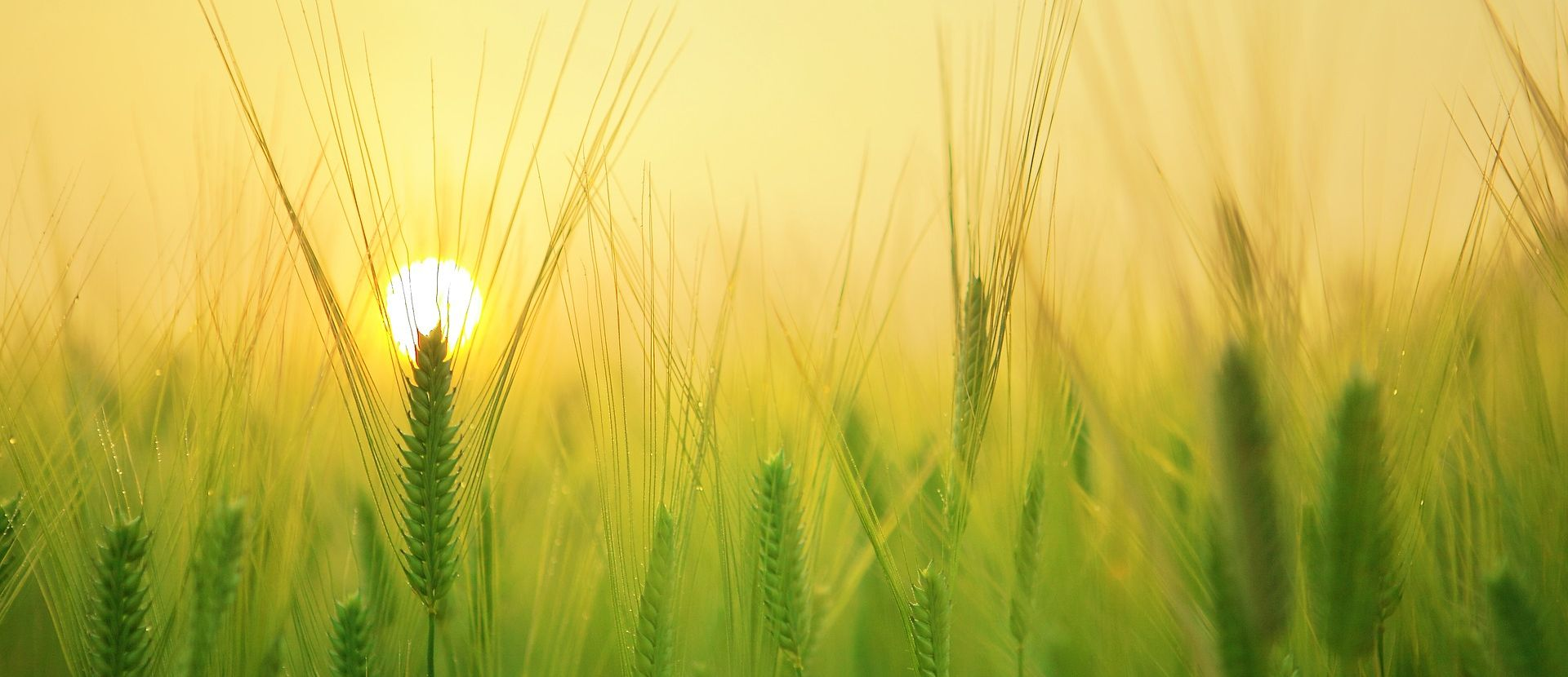 Farm tech startups on the rise to solve the crop forecasting challenge