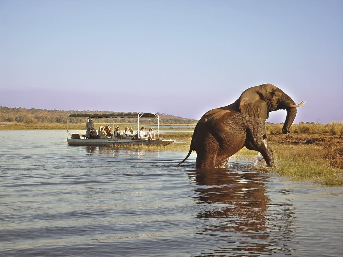 Badender Elefant im Chobe Nationalpark