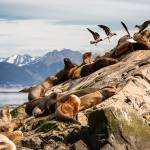 Enchanting Travels Argentina Tours Sea lions and Albatros on isla in beagle channel near Ushuaia
