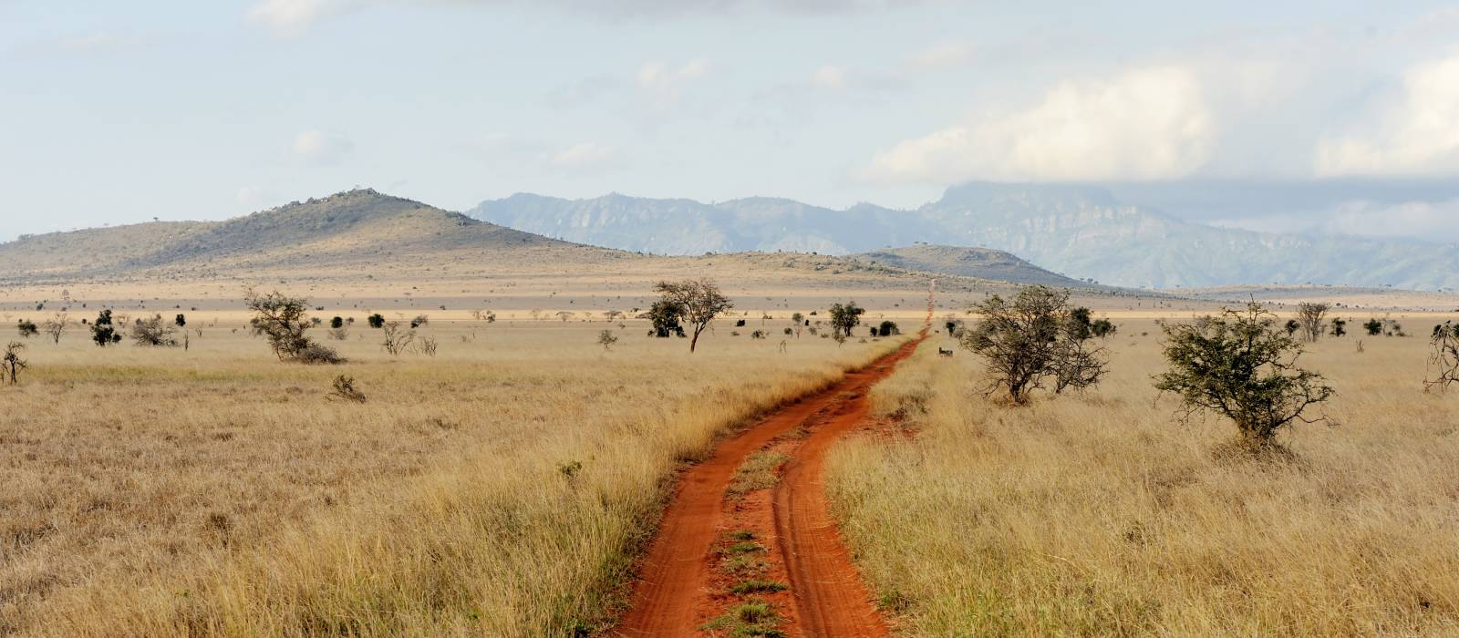 Savannenlandschaft im Nationalpark in Kenia, Afrika