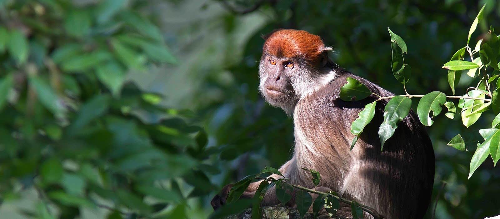 In Kibale regieren die Primaten