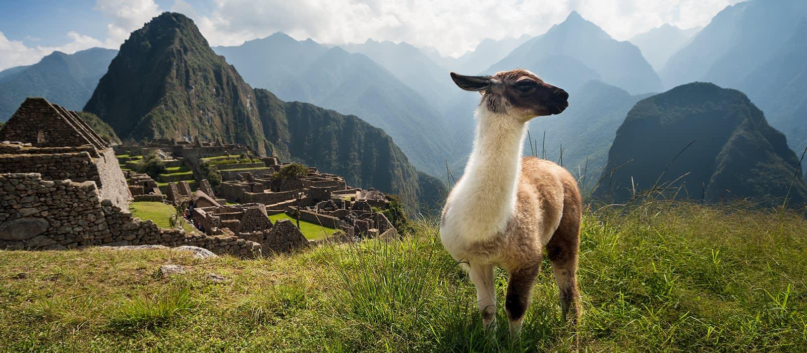 Alpaca vor dem Machu Picchu
