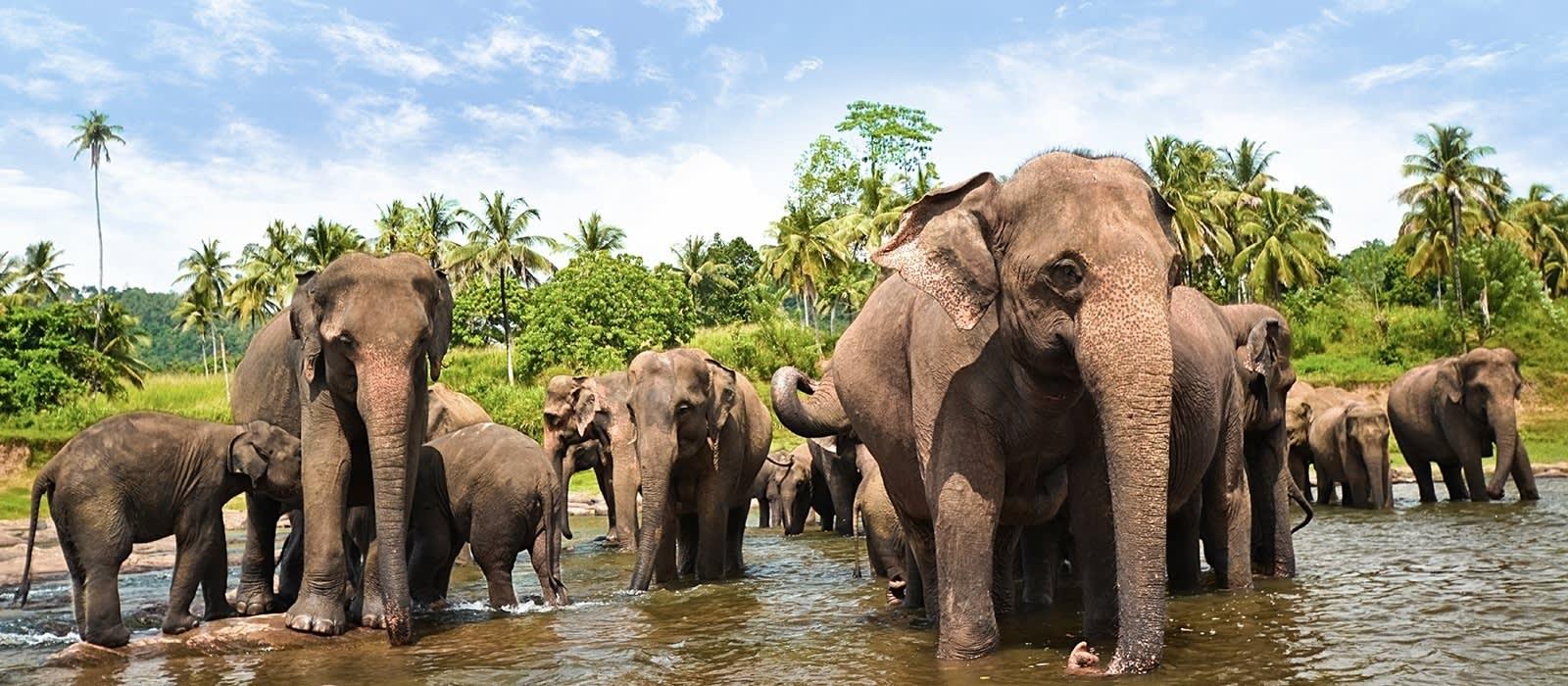 Sicherheit in Sri Lanka: Elefanten sind glücklicherweise keine Gefahr