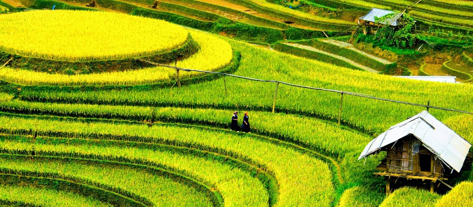 Best time to visit Vietnam - rice fields in Mai chau