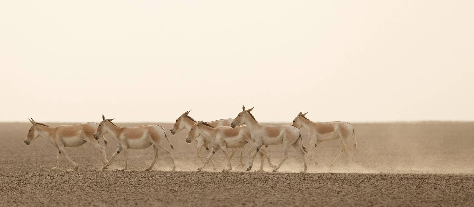 Rann of Kutch - Top things to do in Central & West india