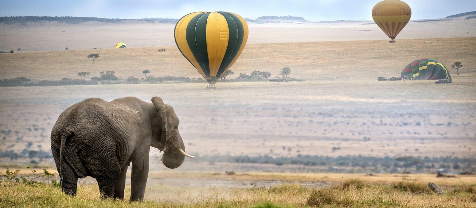 Enchanting Travels Africa Tours elephant , foggy morning, hot air balloons landing on background, Masai Mara National Reserve, Kenya