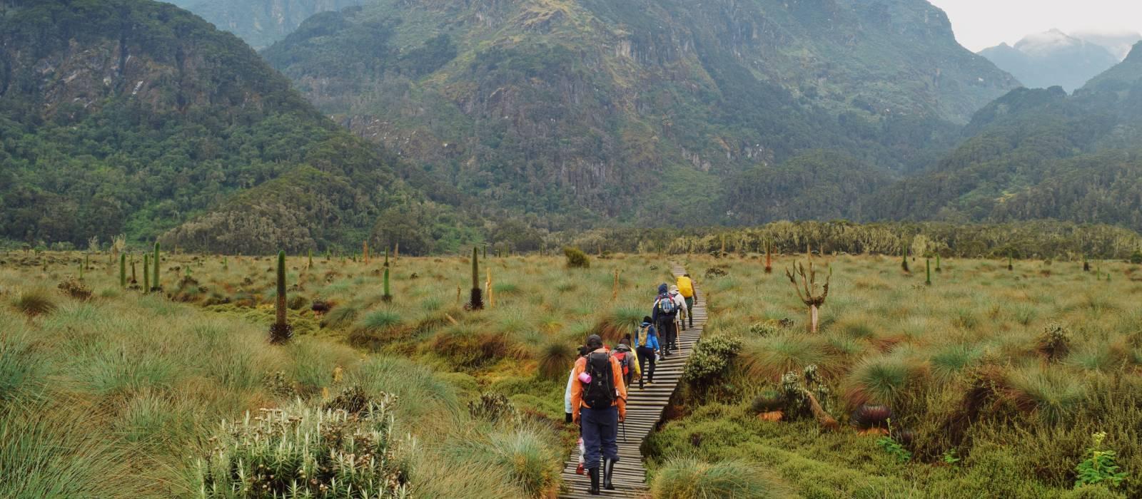 Lower Bigo Bog Rwenzori Mountains, Kabarole, Rwenzori Mountains National Park, Uganda, Africa