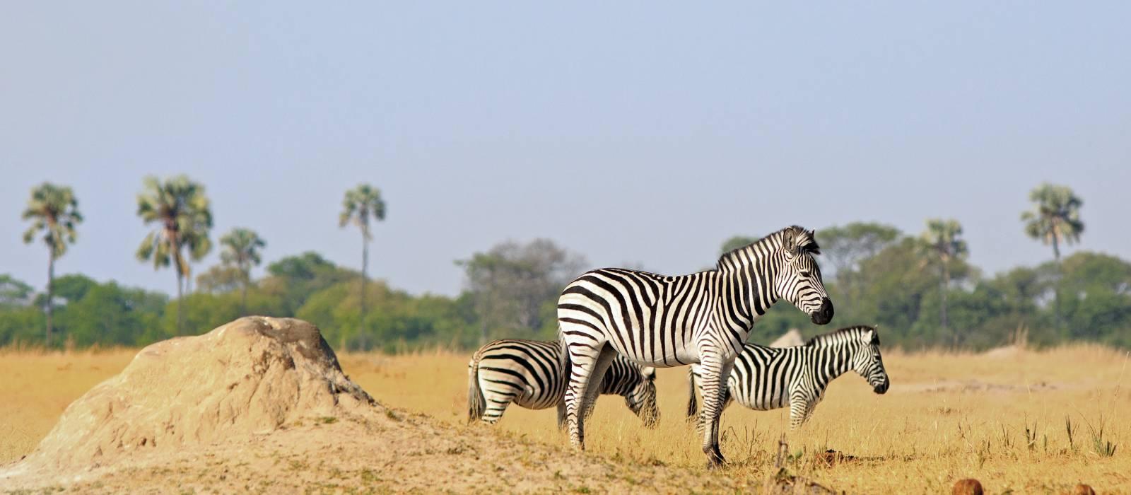 Zebra ,Hwange National Park, Zimbabwe