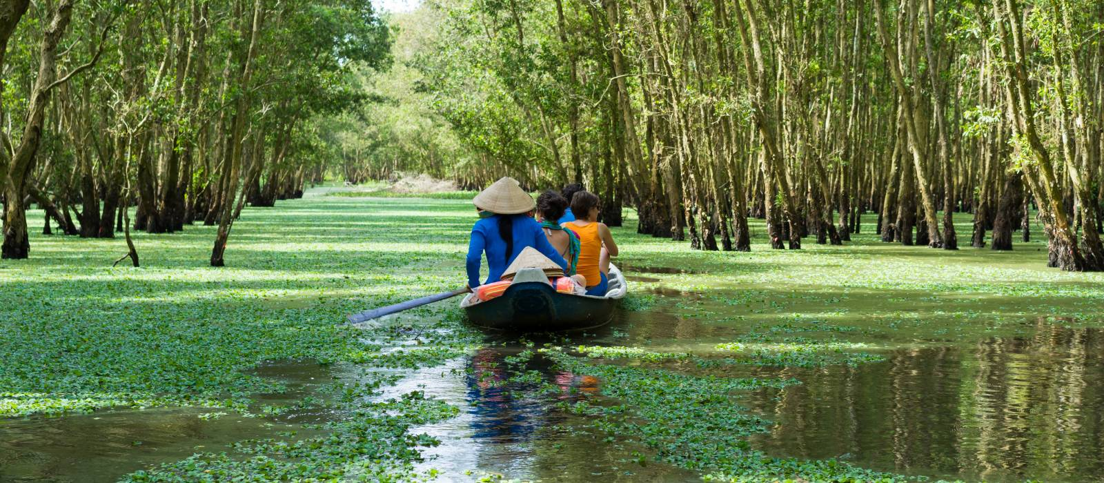 Tourism rowing boat in Tra Su flooded indigo plant forest in An Giang, Mekong delta, Vietnam, Asia