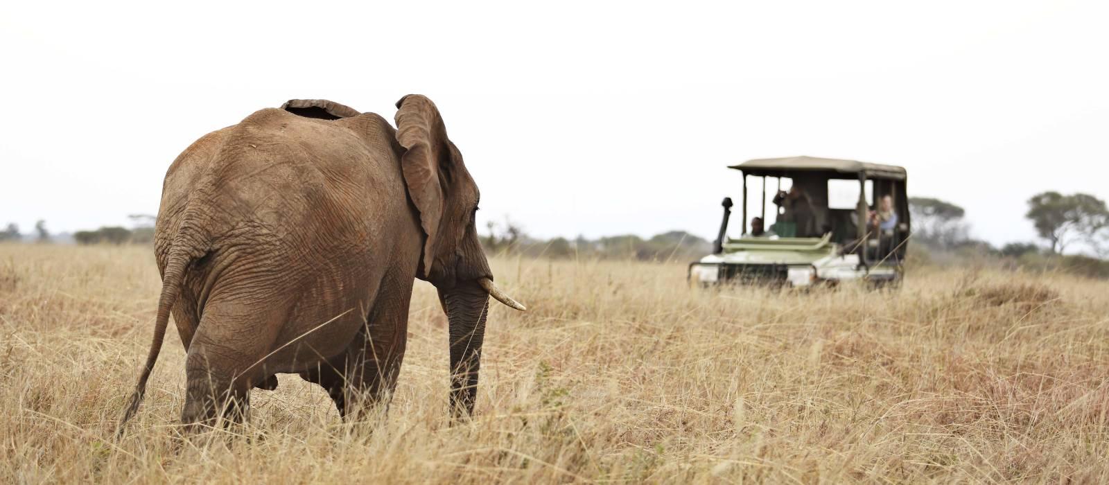 Enchanting Travels Olivers-camp-game-drives-elephant