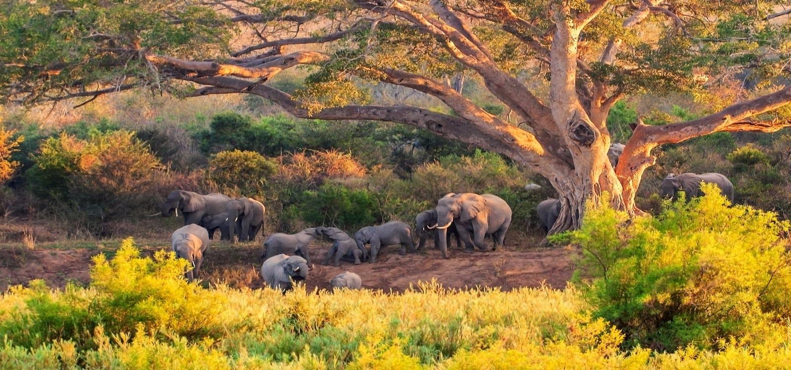 Elefanten im Krüger Nationalpark