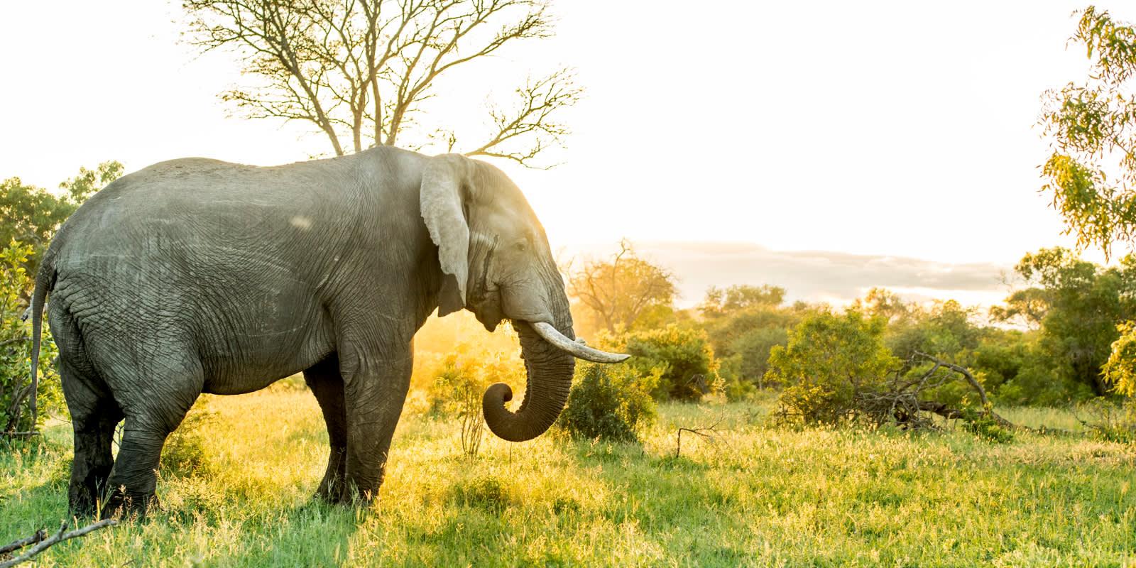 Elefant im Krüger Nationalpark bei strahlendem Himmel