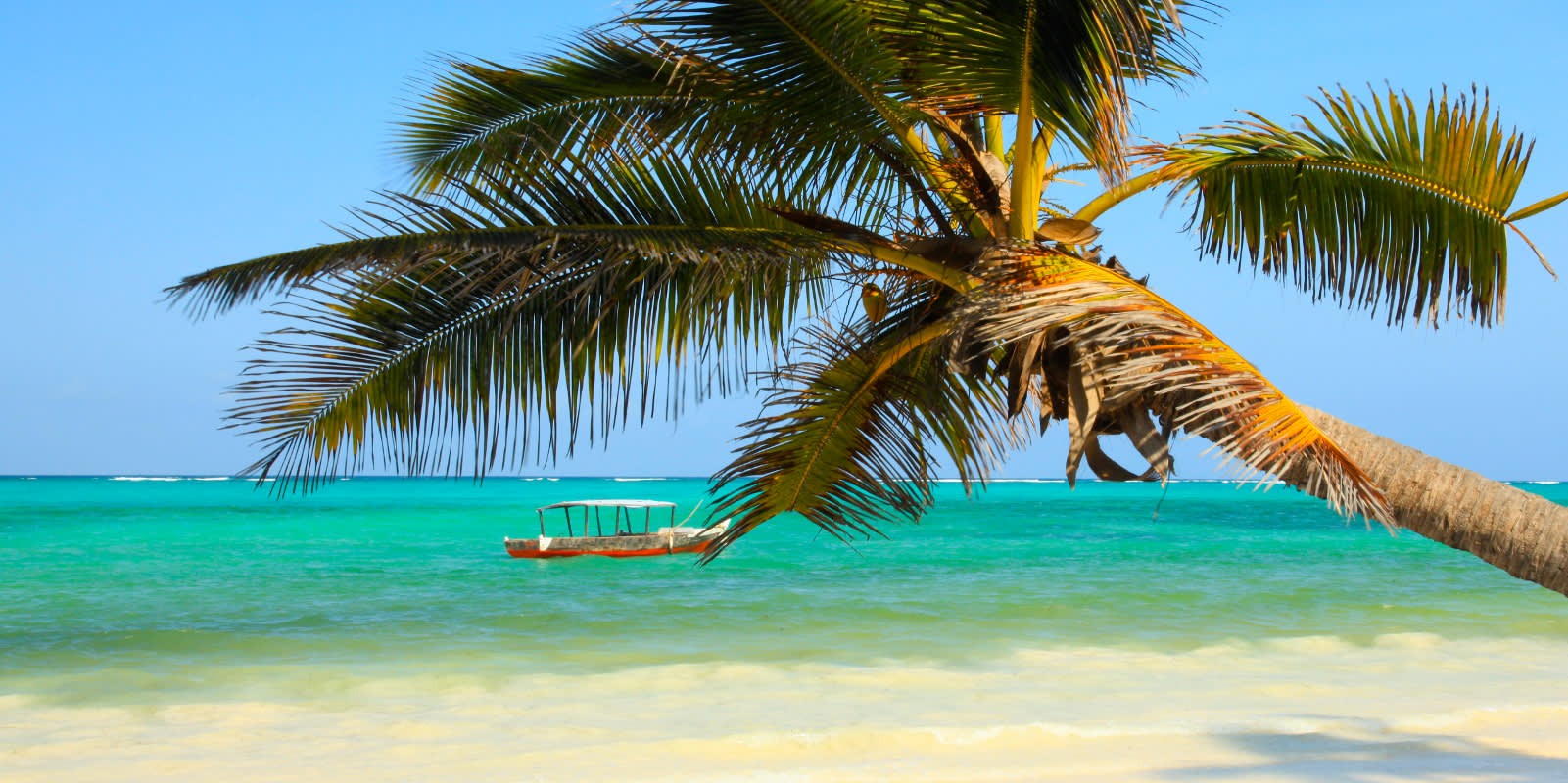 Beste Reisezeit Sansibar - Strand mit Palme
