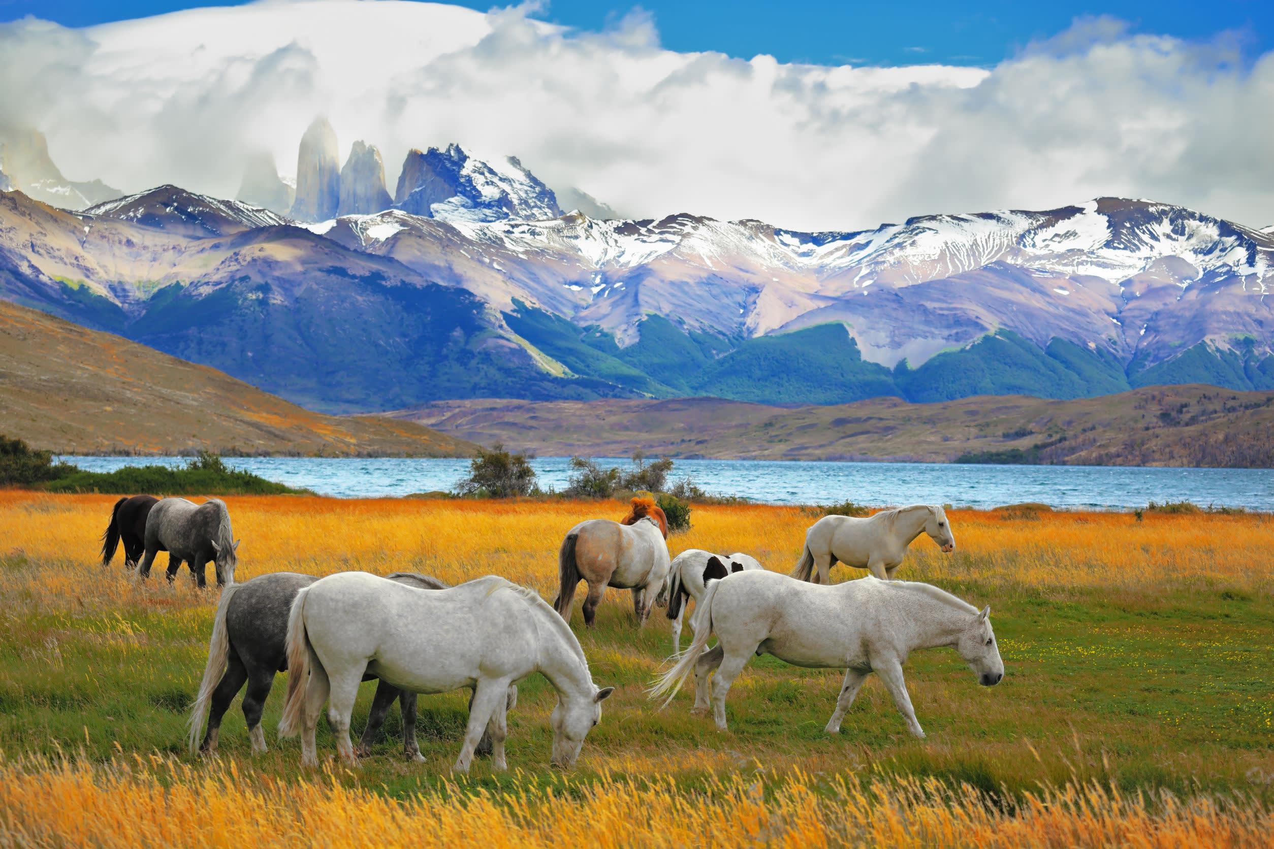 Pferde vor patagonischen Bergen