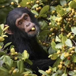 Travel to Uganda