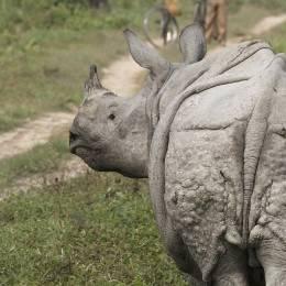 Rhino Kaziranga National Park