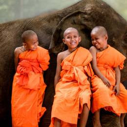 Thailand travel guide - little monks