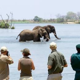 Malawi Safari: Elefanten