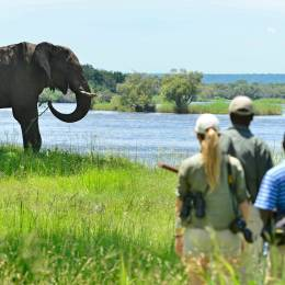 Best Time for a Wildlife Safari in Africa - Best time to visit Zimbabwe