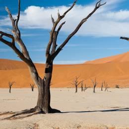 Paysage désertique à Sossusvlei, Namibie