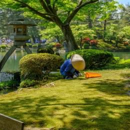 Enchanting Travels Japan Tours Kanazawa Japanese gardener near the Toro lantern in Kenrokuen, a japanese garden