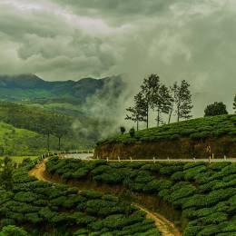 Enchanting Travels India Tours Munnar Tea Plantation during Monsoon India Kerala Asia (1)
