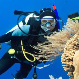 Enchanting Travels Indonesia Tours Scuba diver underwater close to coral reef