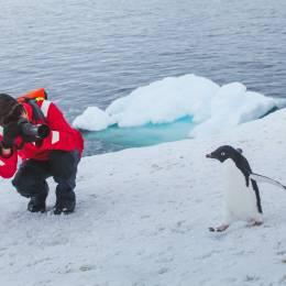 Enchanting Travels Antarctica Tours tourist wildlife photographer taking photo of bird adelie penguin in