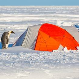 Things to do in Antarctica - Camping